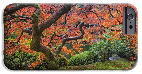 Flora Photographs iPhone Cases - Japanese Maple Tree iPhone Case by Mark Kiver