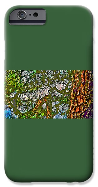 Japanese Pine iPhone Case by Jean Hall