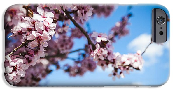 Prescott Arizona iPhone Cases - Japanese Sakura iPhone Case by Anthony Citro