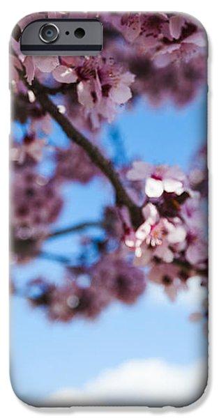 Japanese Sakura iPhone Case by Anthony Citro