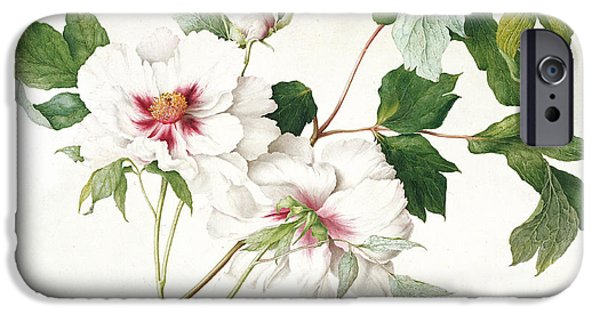 Flora Drawings iPhone Cases - Japanese Tree Peony iPhone Case by  Lucy Cust