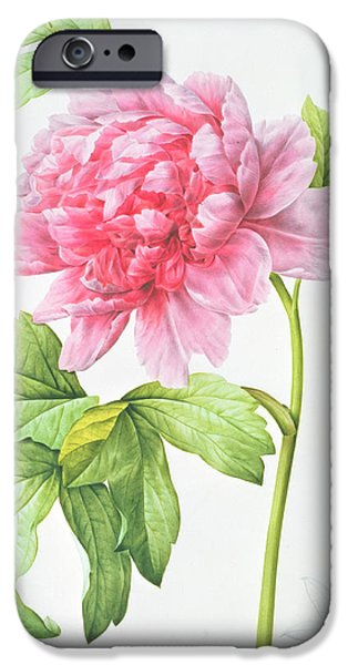 Japanese Tree Peony iPhone Case by Pierre Joseph Redoute