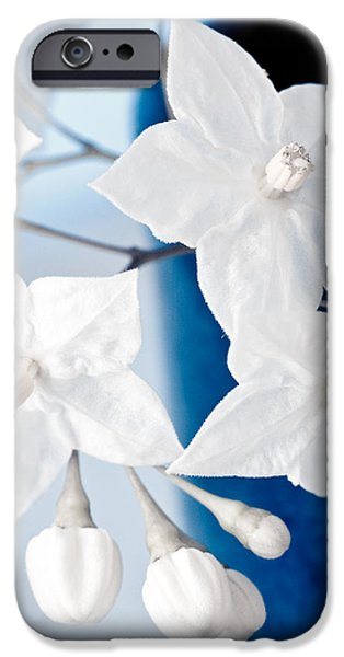 A Sunny Morning iPhone Cases - Jasmine iPhone Case by Frank Tschakert