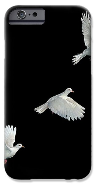 Java Dove in Flight iPhone Case by Stephen Dalton