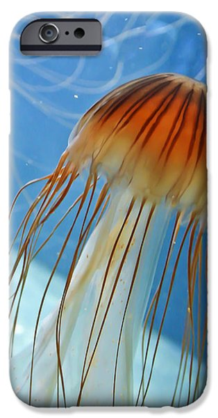 Aquatic Display iPhone Cases - Jelly iPhone Case by Nathan Wright