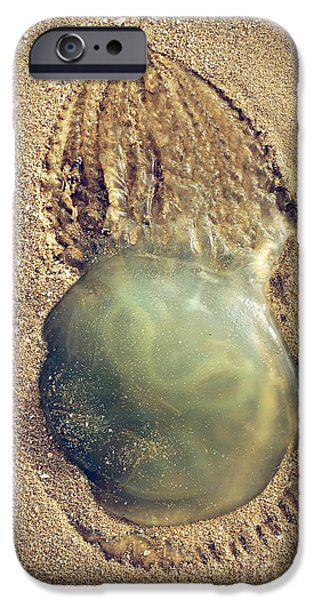 Alga Photographs iPhone Cases - Jellyfish iPhone Case by Carlos Caetano