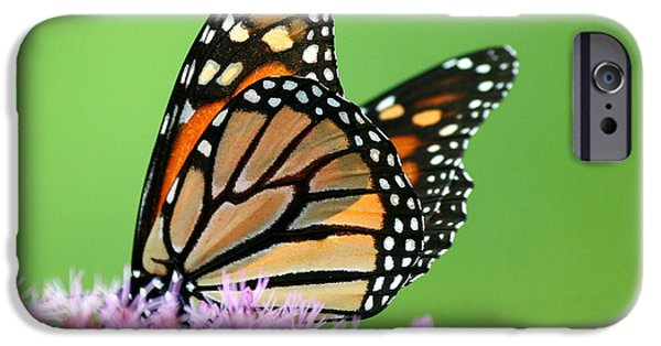Insects iPhone Cases - Joe Pye Monarch Pollination iPhone Case by Neal  Eslinger