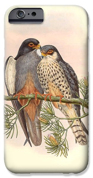 Antiques iPhone Cases - John Gould Birds iPhone Case by Gary Grayson