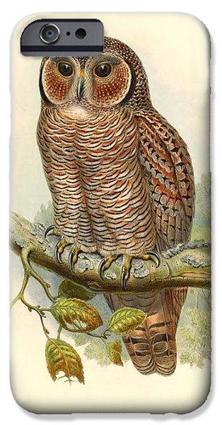 Antiques iPhone Cases - John Gould Owl iPhone Case by Gary Grayson