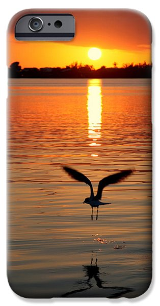 Seagull iPhone Cases - Jonathan Livingston Seagull iPhone Case by Karen Wiles