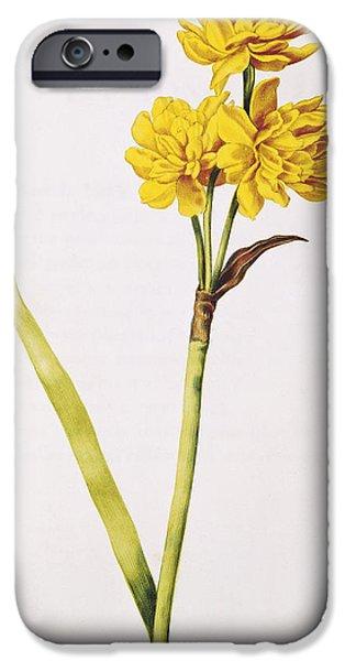 Robert Plant Print iPhone Cases - Jonquil iPhone Case by Nicolas Robert
