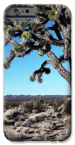 National Preserves iPhone Cases - Joshua Tree iPhone Case by John Rizzuto