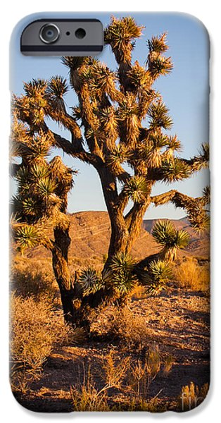 Recently Sold -  - Haybale iPhone Cases - Joshua Tree iPhone Case by Robert Bales