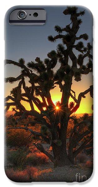 National Preserves iPhone Cases - Joshua Tree Sunset iPhone Case by Eddie Yerkish