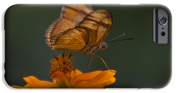 Biologic iPhone Cases - Julia Butterfly iPhone Case by Heiko Koehrer-Wagner