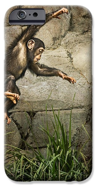 Ape iPhone Cases - Jump for Joy iPhone Case by Jamie Pham