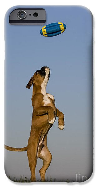 Boxer iPhone Cases - Jumping Boxer Puppy iPhone Case by Jean-Louis Klein and Marie-Luce Hubert