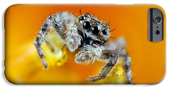 Jumping Spiders iPhone Cases - Jumping Spider iPhone Case by Brandon Alms