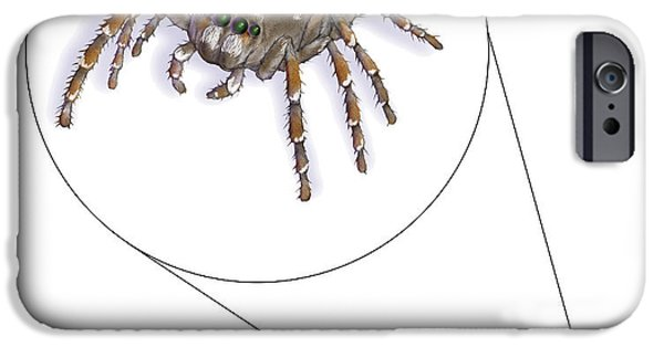 Jumping Spiders iPhone Cases - Jumping Spider Family Salticidae iPhone Case by Carlyn Iverson