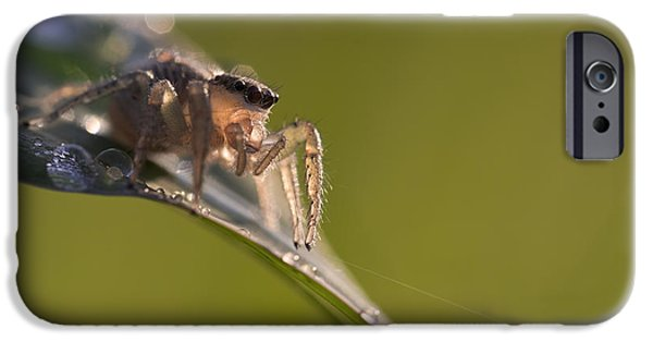 Jumping Spiders iPhone Cases - Jumping Spider Macro on Blade of Grass iPhone Case by Brandon Alms