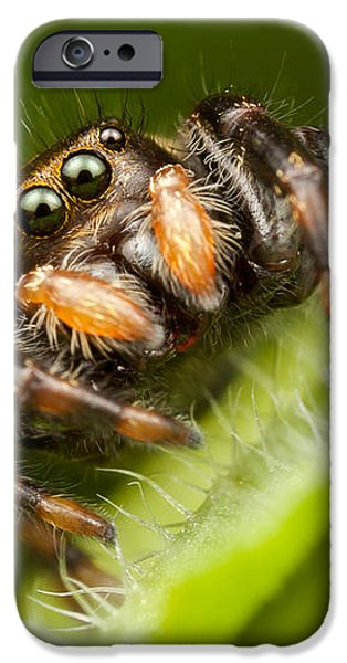 Jumping Spider Phidippus clarus I iPhone Case by Clarence Holmes