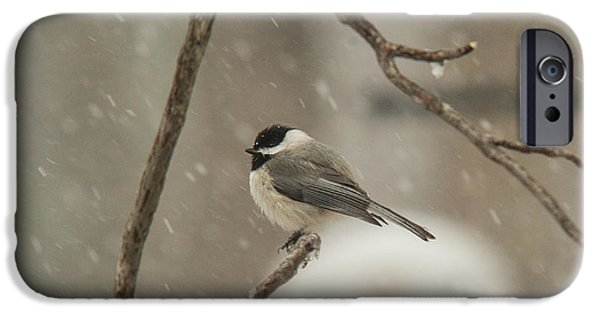 Membrane iPhone Cases - Junco Facing the Elements iPhone Case by Douglas Barnett