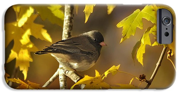 Business Photographs iPhone Cases - Junco in Morning Light iPhone Case by Nava  Thompson