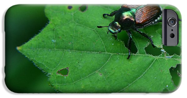 Bugs Pyrography iPhone Cases - June Bug 1 iPhone Case by Jeffrey Platt