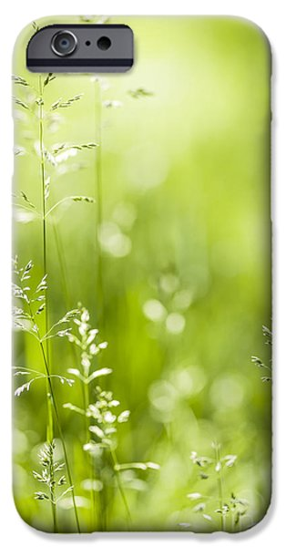 Botanical Photographs iPhone Cases - June green grass  iPhone Case by Elena Elisseeva