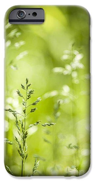 June green grass flowering iPhone Case by Elena Elisseeva