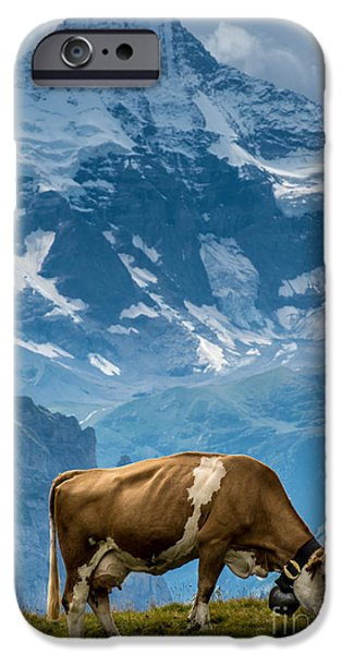 Grindelwald iPhone Cases - Jungfrau Cow - Grindelwald - Switzerland iPhone Case by Gary Whitton