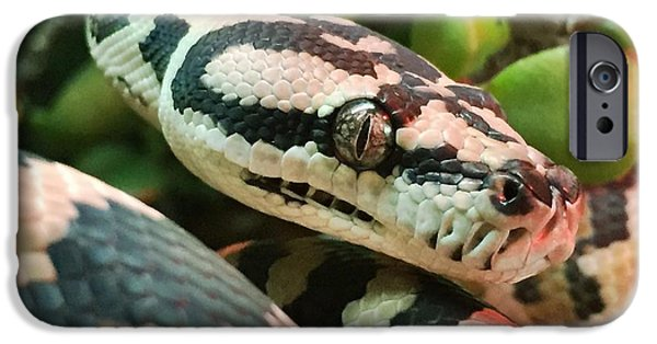 Jungle iPhone Cases - Jungle Python iPhone Case by Kelly Jade King