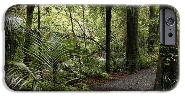 Pathway iPhone Cases - Jungle trail iPhone Case by Les Cunliffe
