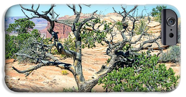 Slickrock iPhone Cases - Juniper Bushes iPhone Case by Nicholas Blackwell