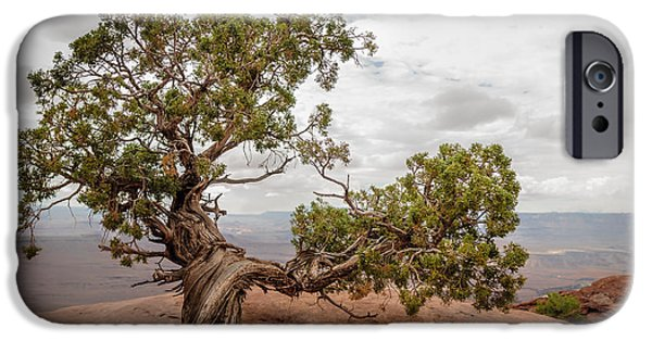 Red Rock iPhone Cases - Juniper iPhone Case by Joseph Smith