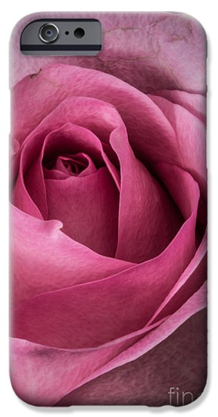 Close Glass iPhone Cases - Just A Rose iPhone Case by Mitch Shindelbower