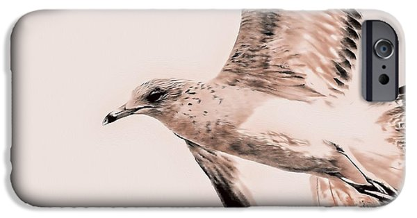 Flying Seagull iPhone Cases - Just a Seagull iPhone Case by Deborah Benoit