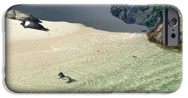 Famous Highway 1 In California iPhone Cases - Just Born Baby Sea Lion Pup with Mom and Dad Napping on the Beach iPhone Case by Artist and Photographer Laura Wrede