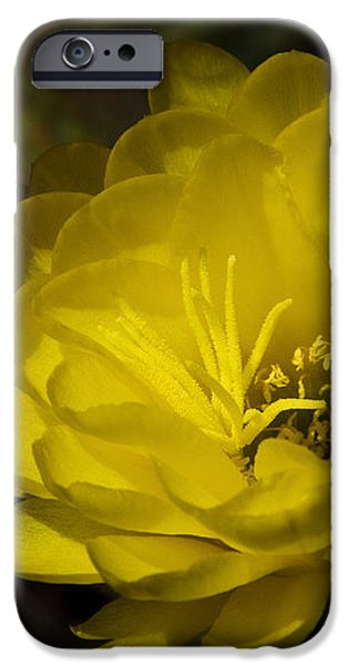 Just Call Me Mellow Yellow  iPhone Case by Saija  Lehtonen