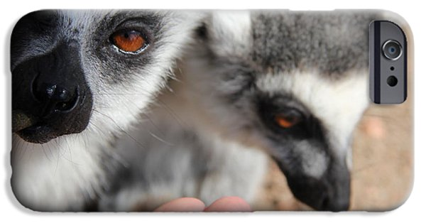Attitude iPhone Cases - Just feed me...  iPhone Case by Jackie Mestrom