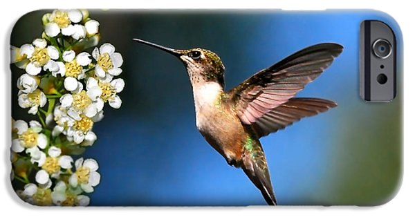 Animals Photographs iPhone Cases - Just Looking iPhone Case by Christina Rollo