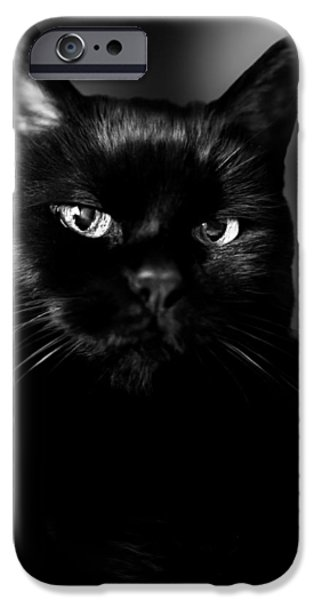Bob Cats iPhone Cases - Just Thinking iPhone Case by Bob Orsillo