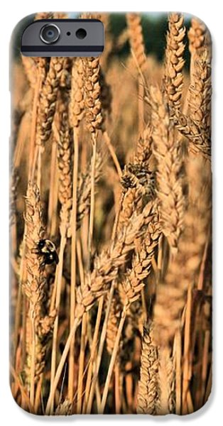 Just Wheat  iPhone Case by JC Findley