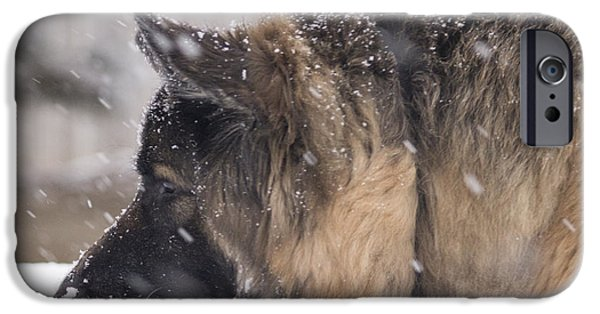 Black Dog iPhone Cases - Justice 6 iPhone Case by Becca Buecher