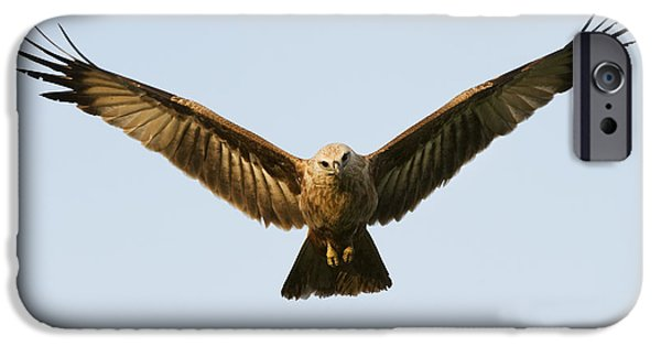 Glides iPhone Cases - Juvenile Brahminy Kite Hovering iPhone Case by Tim Gainey