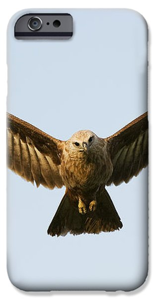 Juvenile Brahminy Kite Hovering iPhone Case by Tim Gainey