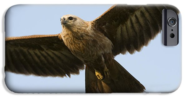 Hovering iPhone Cases - Juvenile Brahminy Kite iPhone Case by Tim Gainey