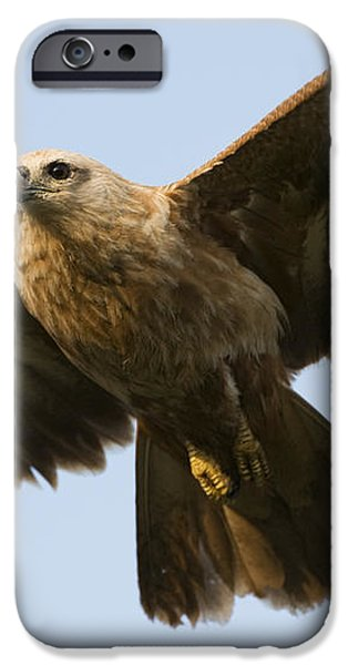 Juvenile Brahminy Kite iPhone Case by Tim Gainey