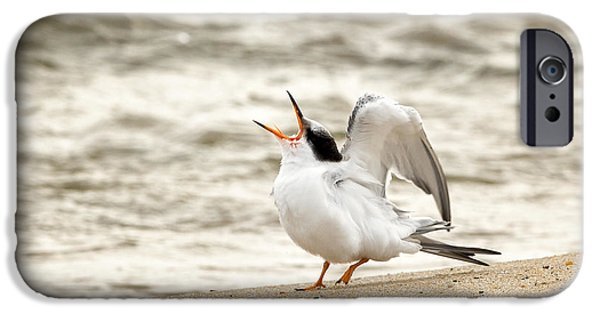 Baby Bird iPhone Cases - Juvenile Common Tern iPhone Case by Bill  Wakeley