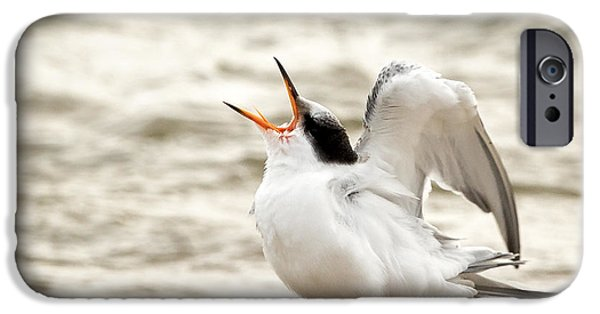 Baby Bird iPhone Cases - Juvenile Common Tern Square iPhone Case by Bill  Wakeley